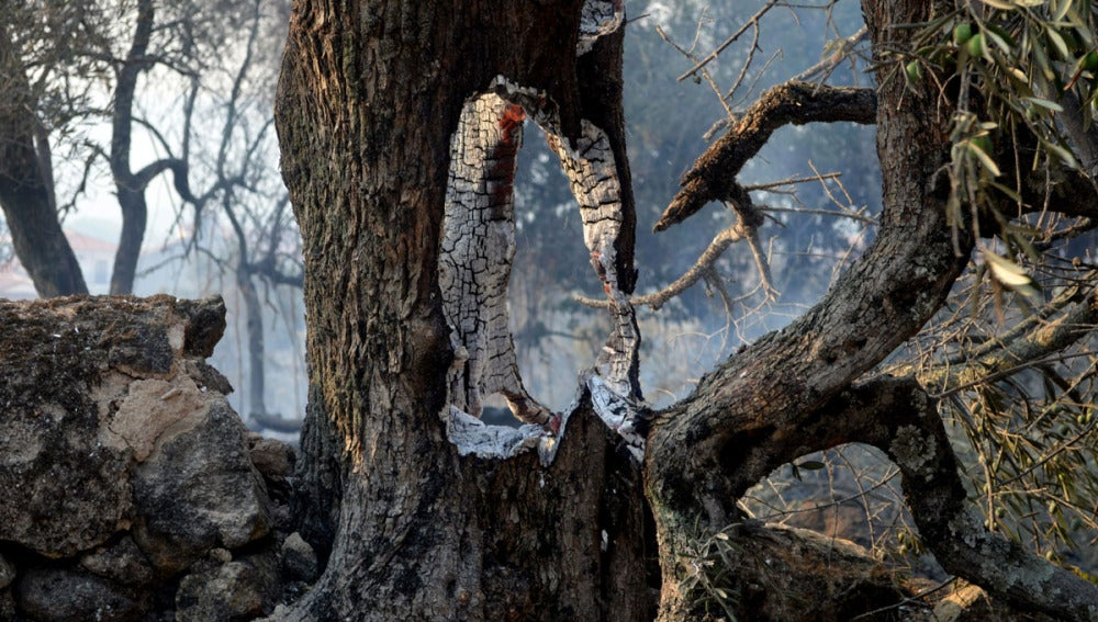 El fuego castiga Sierra de Gata