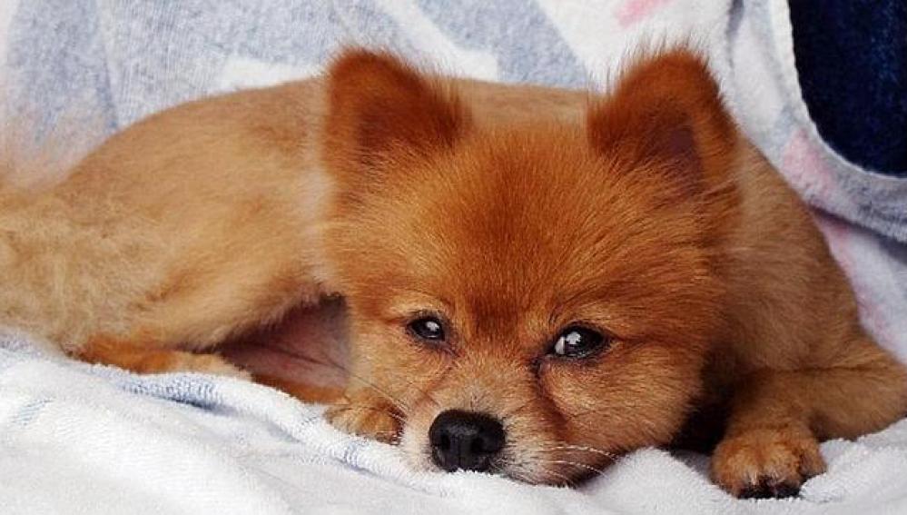 Fox, el perro encontrado muerto