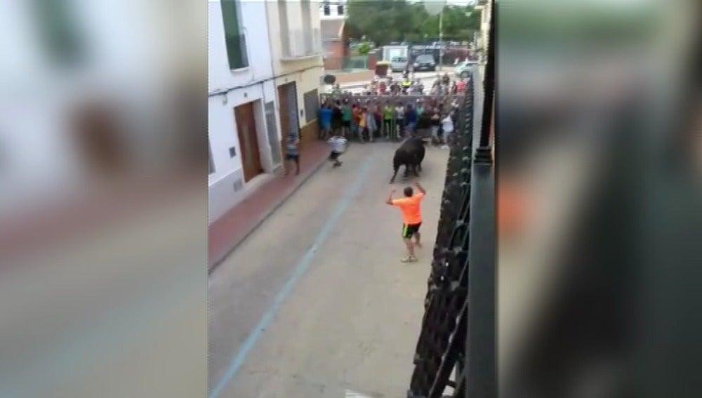 Bous al carrer en Muleros, Valencia