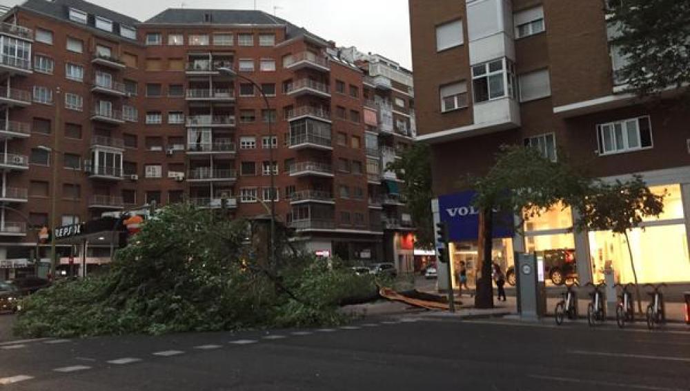 Un árbol ha caído en mitad de la calzada en la calle Bravo Murillo