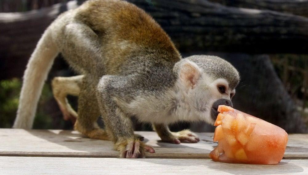 Un mono tití ardilla come un helado de fruta