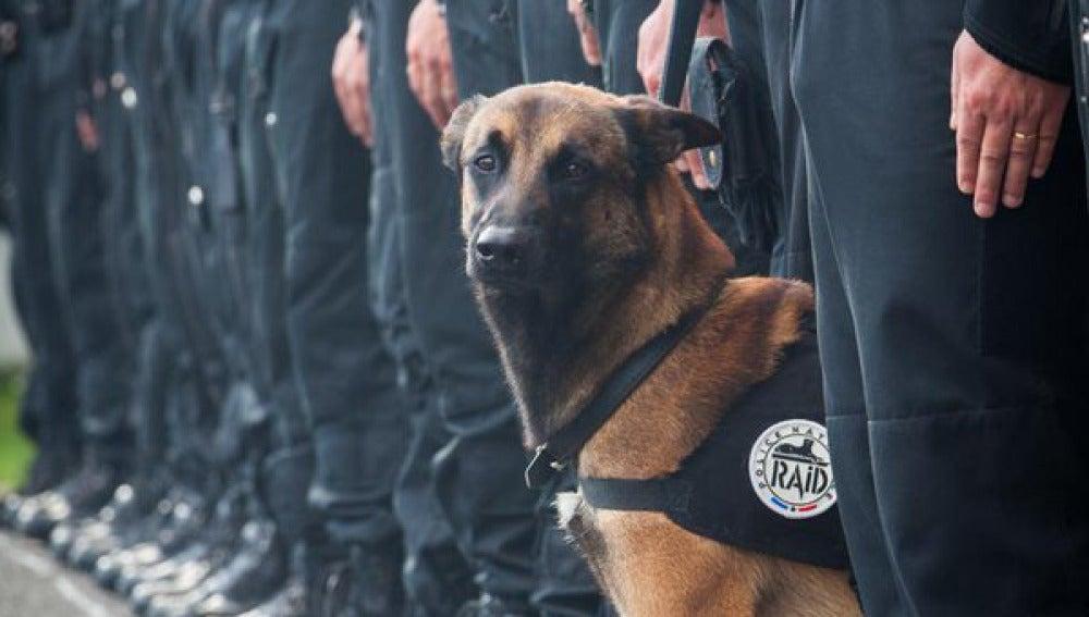 Diesel, el perro de la policía francesa