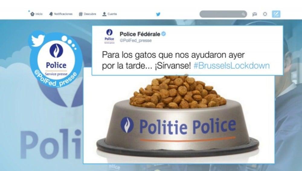 La Policía agradece que los belgas respondieran con fotos de gatos al 'apagón informativo' sobre las operaciones