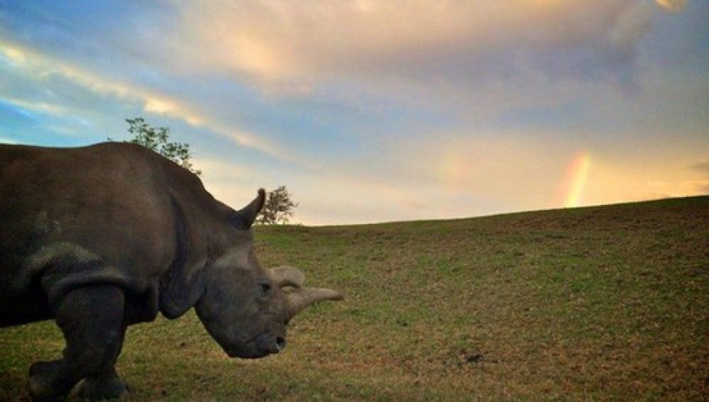 La rinoceronte Nola