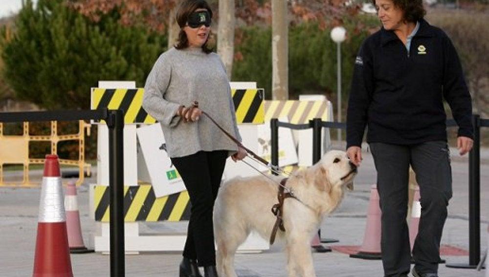 Soraya Sáenz de Santamaría, con los ojos vendados acompañada de un perro guía