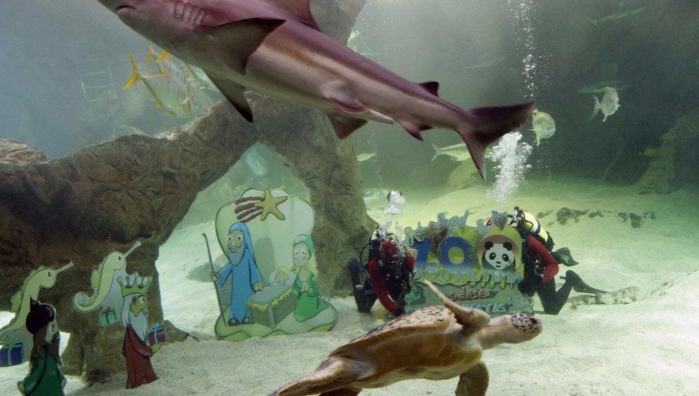 Belén acuático en el zoo de Madrid