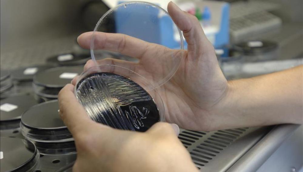 Una muestra recogida en unas torres de refrigeración es analizada en un laboratorio.