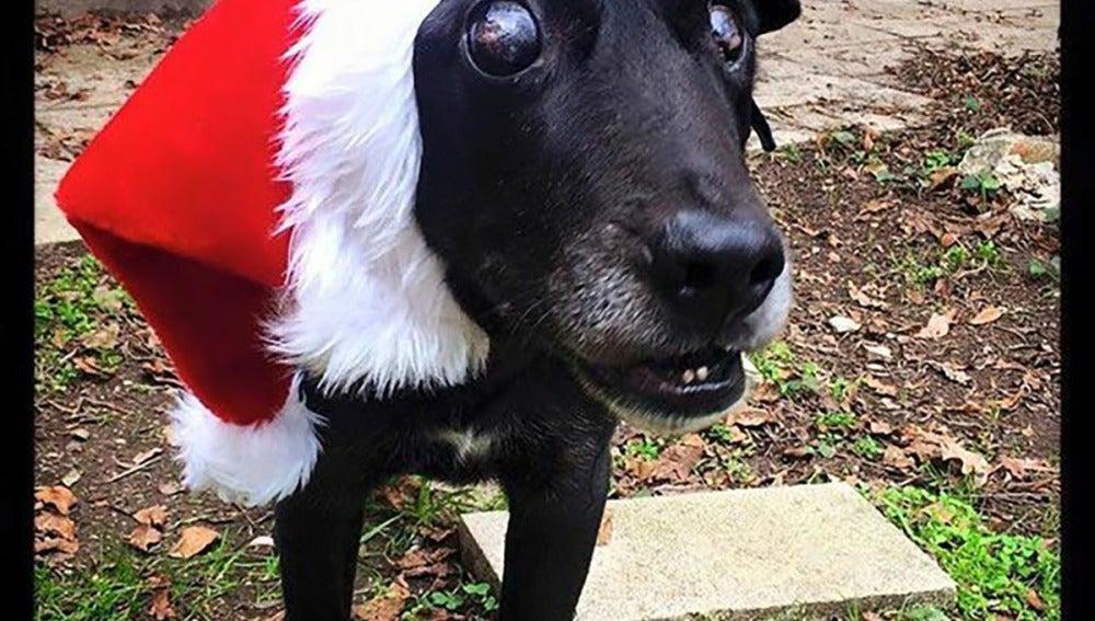 Blackie con un gorro de Papá Noel