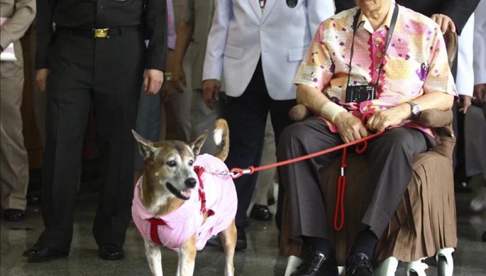 Thong Daeng, adoptada en 1998, solía aparecer en fotos oficiales del rey