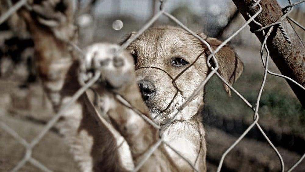 El fiscal de medioambiente anima a los ciudadanos a denunciar el maltrato animal