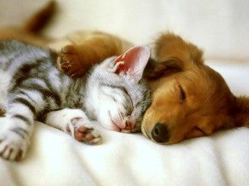 Un perro y un gato durmiendo