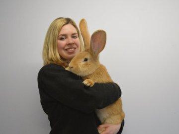 Atlas, conejo gigante que busca un nuevo hogar en Escocia