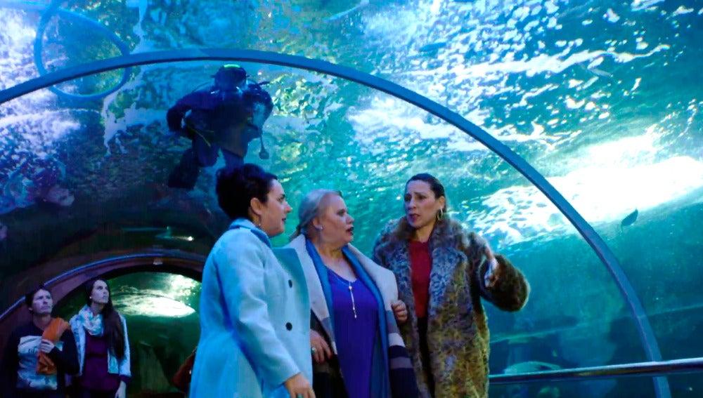 Las vecinas encuentran a Peio en el Aquarium