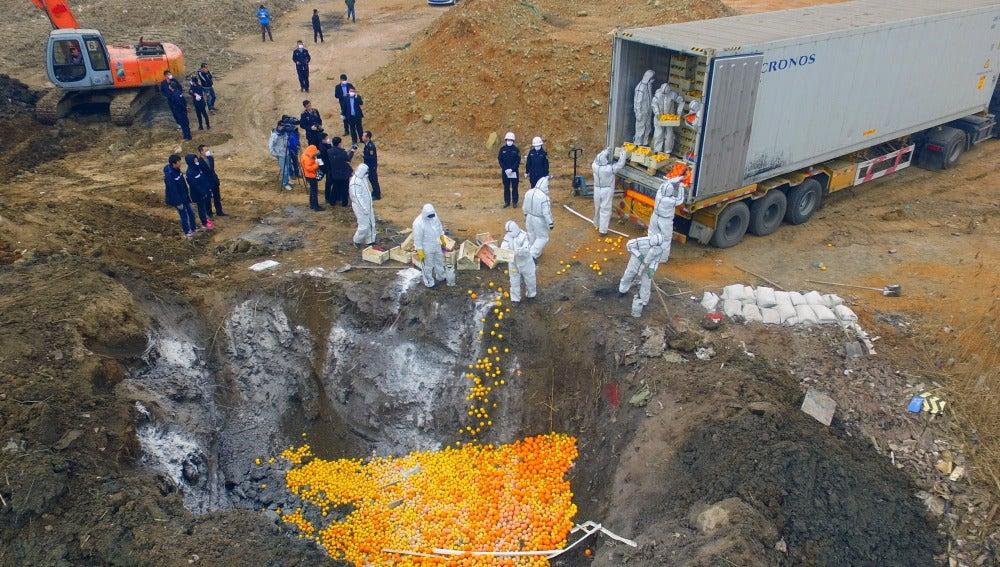 Destruyen 20 toneladas de naranjas y limones