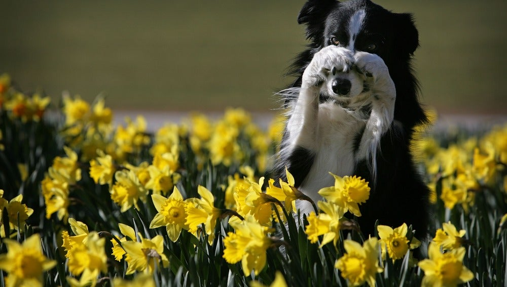 Un perro se esconde entre varias flores
