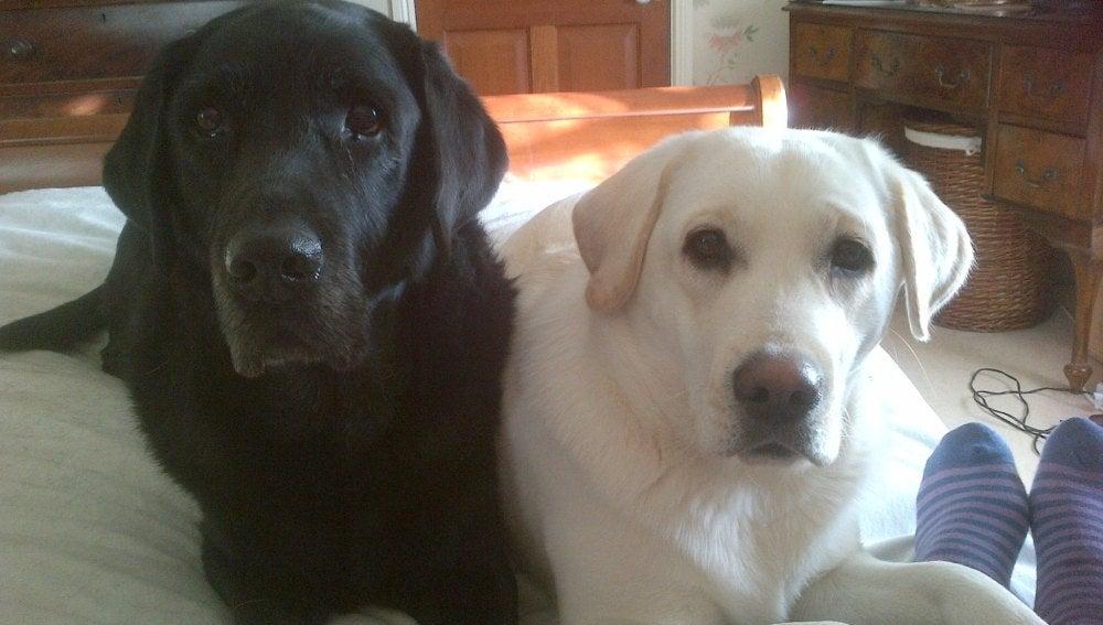 Mabel (d) junto a su compañero Murphy (i)