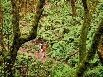 Plantas prehistóricas en La Gomera