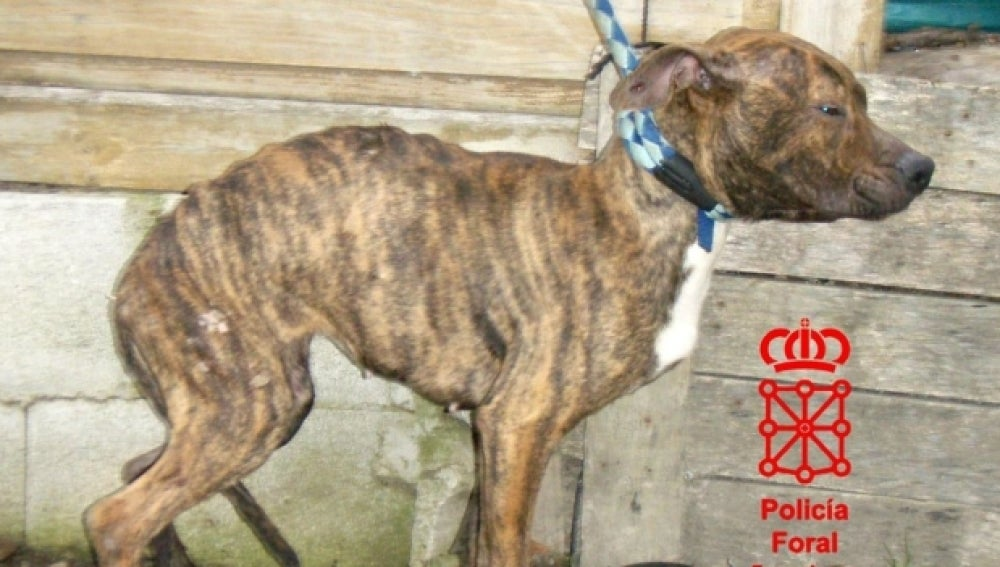 La perra que sobrevivió tras el abandono