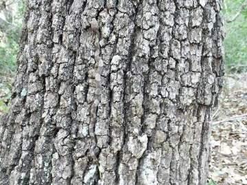 La serpiente ha desarrollado la capacidad de trepar y camuflarse en los árboles