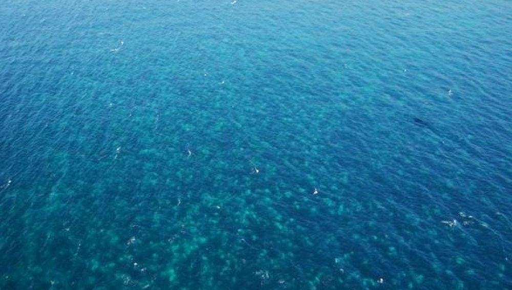 Mancha de 16 kilómetros de extensión en el mar con miles de medusas