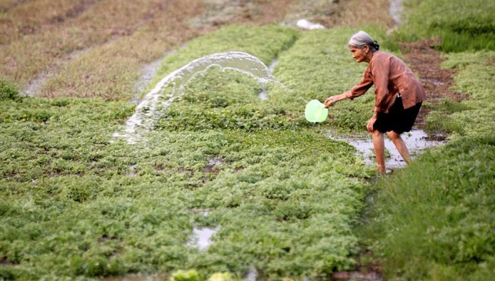 Una mujer riega su huerto en Hanoi (Vietnam)