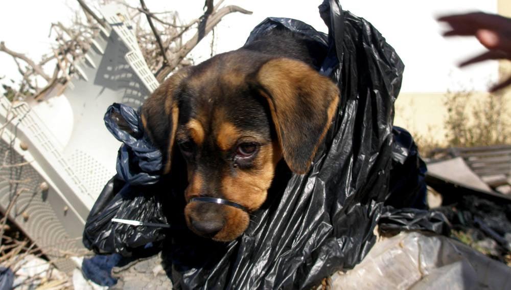 'Campa', la cachorro rescatada