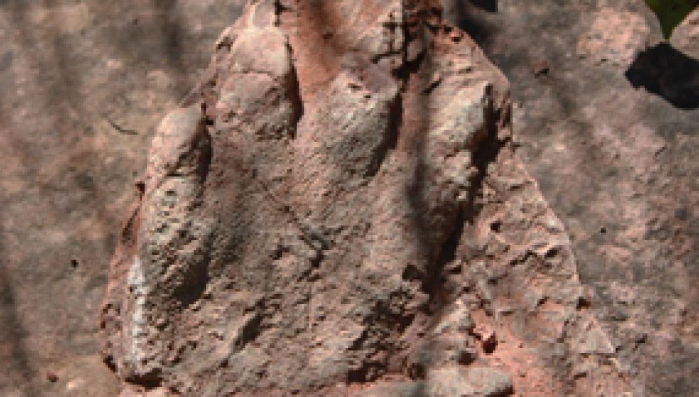 Huella de reptil encontrada