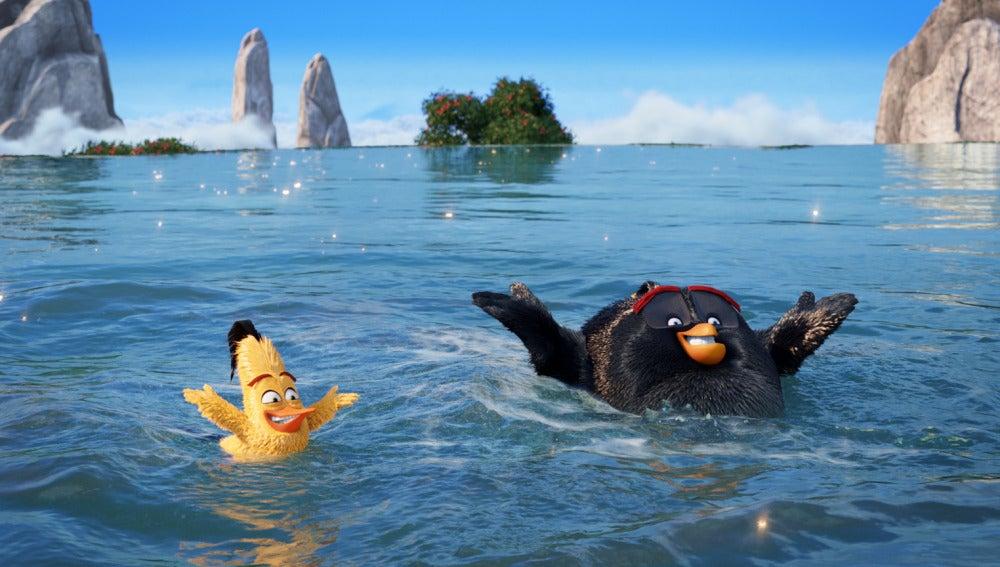 Las mejores imágenes de 'Angry Birds'