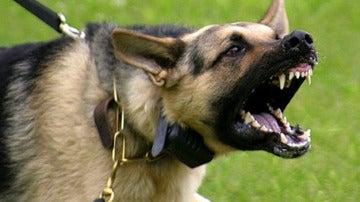Imagen de un perro agresivo