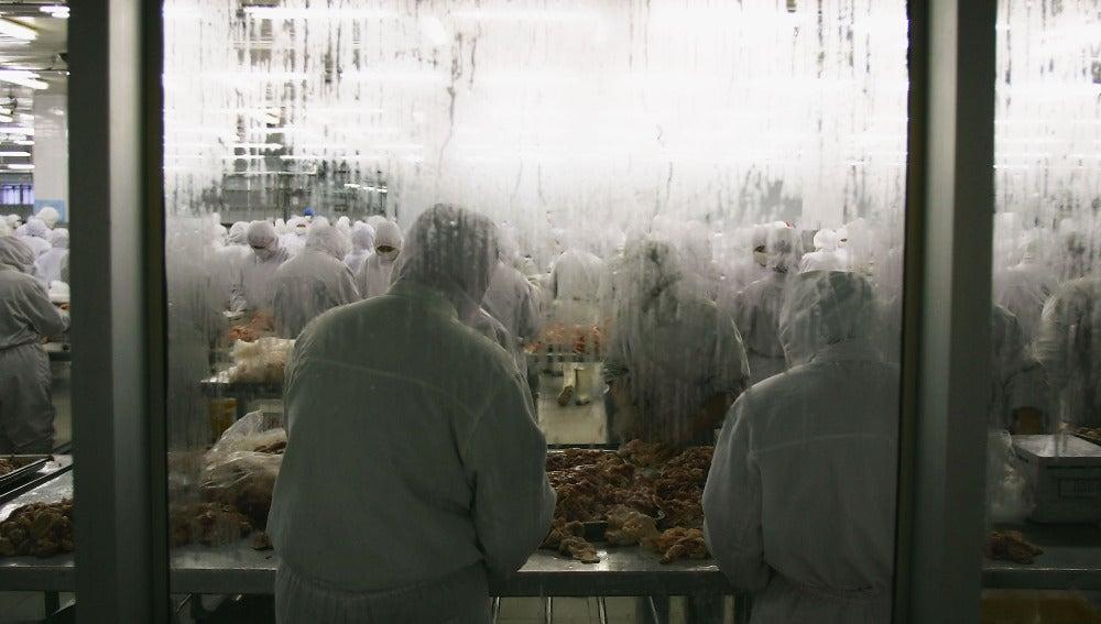 Trabajadores de una compañía avícola
