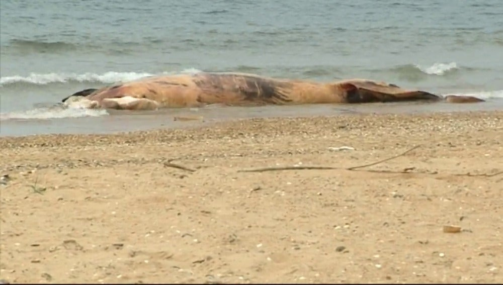 Frame 43.767116 de: Nadie se hace cargo del ballenato muerto en Huelva
