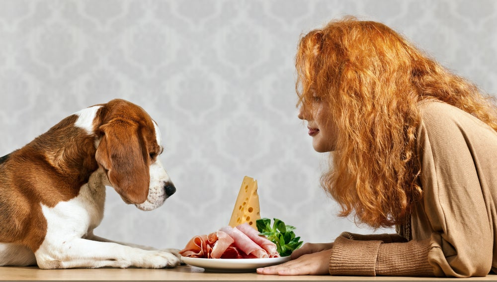 Perro y dueña comiendo