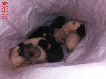 Imagen de los cachorros abandonados de la Policía foral de Navarra.