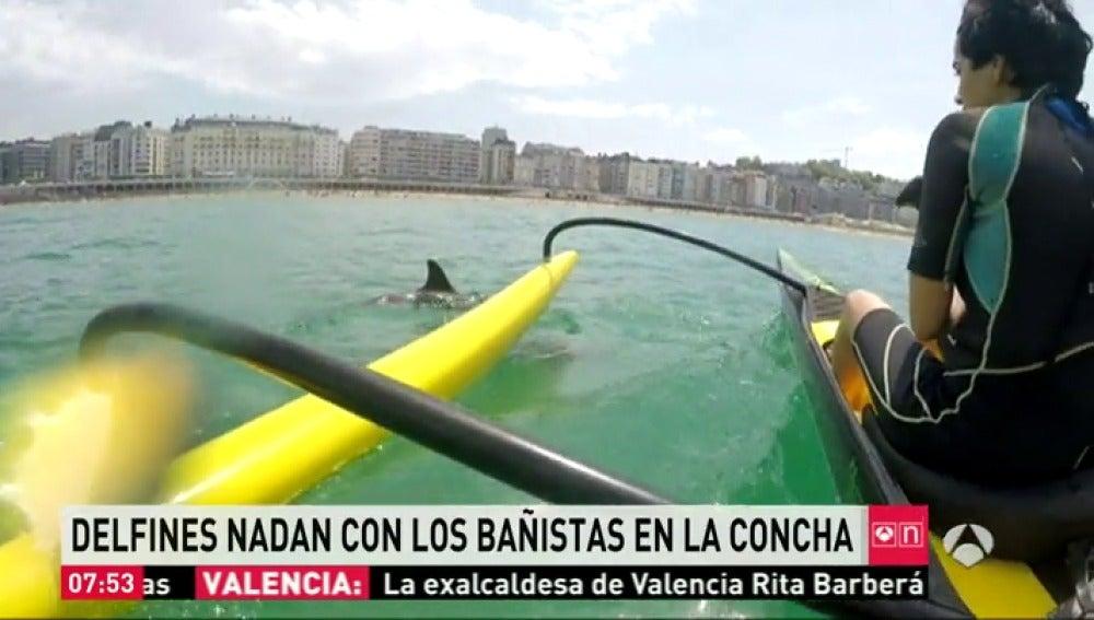 Delfines con bañistas en La Concha
