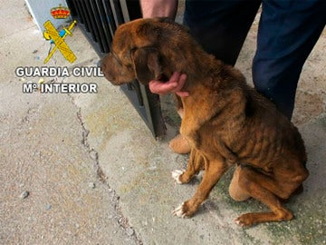 El perro encontrado en estado de desnutrición