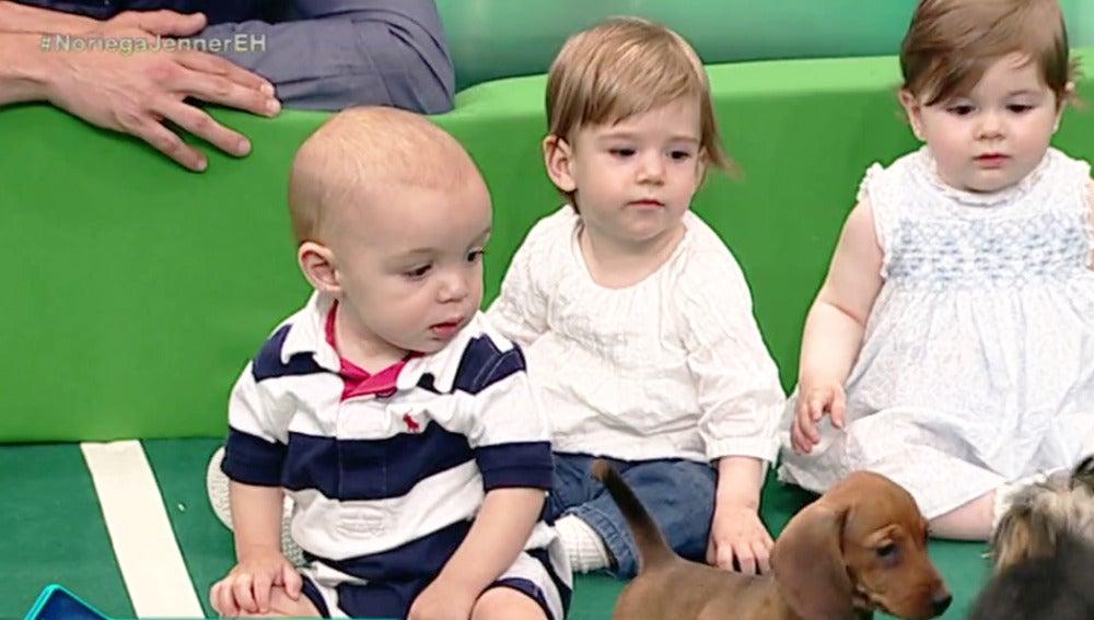 Así reaccionan perretes y bebés al verse por primera vez