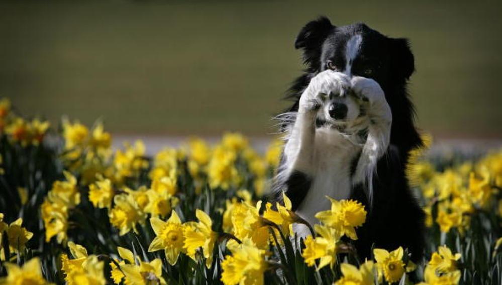 Un perro entre flores