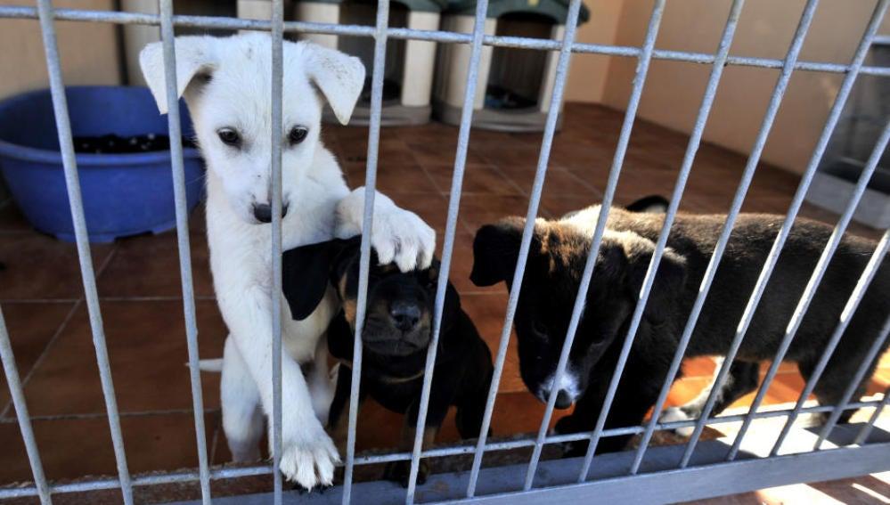Antena 3 tv la asamblea de madrid proh be por unanimidad for Protectora de animales malaga ciudad jardin