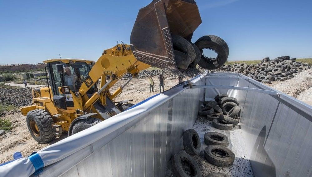 Recogen los neumáticos no quemados en Seseña