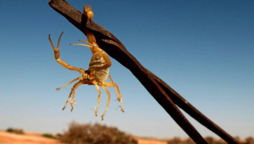 Un escorpión en el desierto