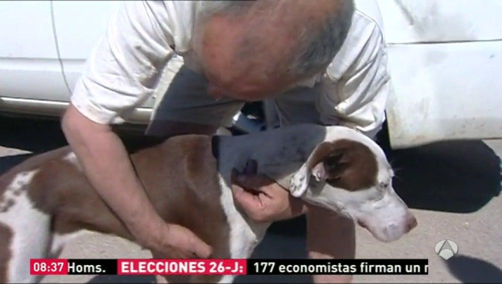 Frame 26.886271 de: Un dueño se encuentra con su perro tras el incendio de Valencia