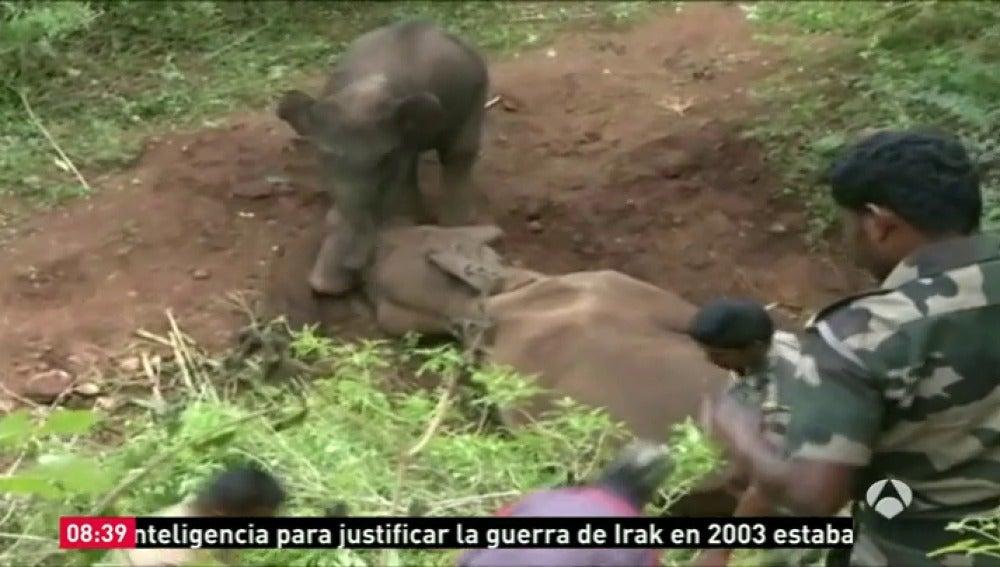 Frame 4.856073 de: elefante