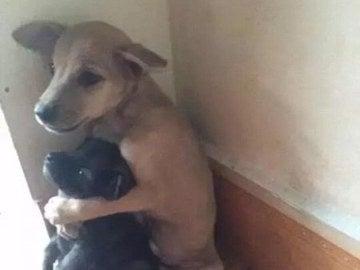 Los cachorros se han convertido en amigos inseparables.