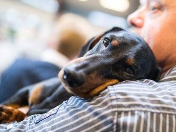 Los españoles compran más mascotas y adoptan menos, según un estudio
