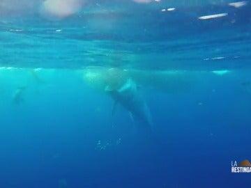 Frame 26.879986 de: Graban a una ballena engullendo un banco de peces en aguas de El Hierro