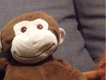 El 'mono' de peluche perdido en Valladolid.