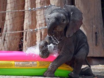 ¡Jugando en la piscina!