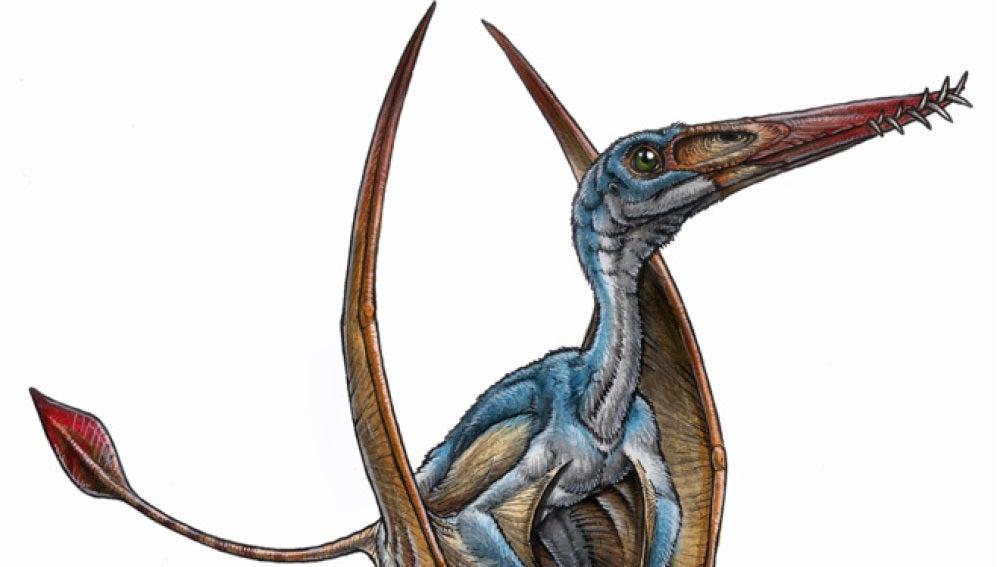 Ilustración del Allkauren koi.