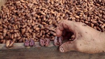 """Un trabajador muestra los granos de cacao en el """"Jorge Salazar"""" Cooperativa en la población de El Tule en Matagalpa, Nicaragua"""