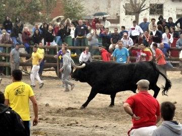 El Toro de la Peña en Tordesillas